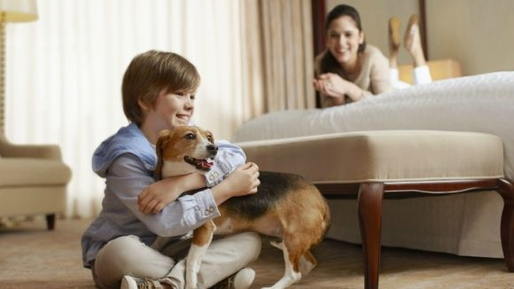 Bring Your Beloved Dog To Our Pet Friendly Baltimore Hotel
